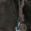 16 strand collar