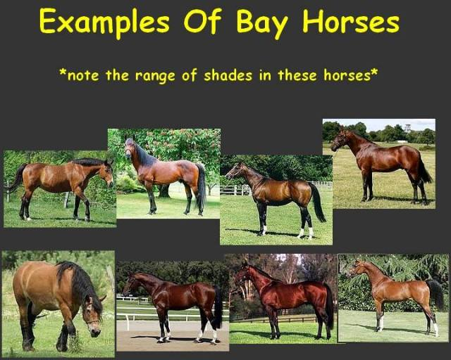 Example Bay in horses