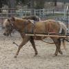 haystring harness parts - KoKo