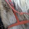 haystring breast collar